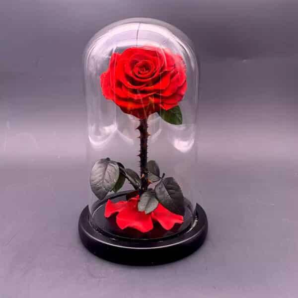 Grabnete.com Grabnete.com - Вечна роза в стъкленица